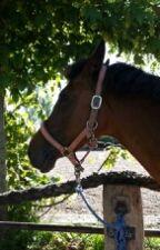 Das Leben eines Pferdes by blausternloverin