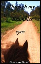 Through My Brumbies Eyes by I_love_Castiel