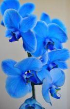Голубая орхидея снежного барса by yanasamara1990