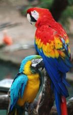 Macaws by cobberbj