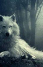 the wolf man by marianamartinho13