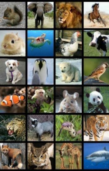 curiosidades sobre los animales
