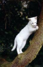 Warrior Cat Active RP by Catloverc555