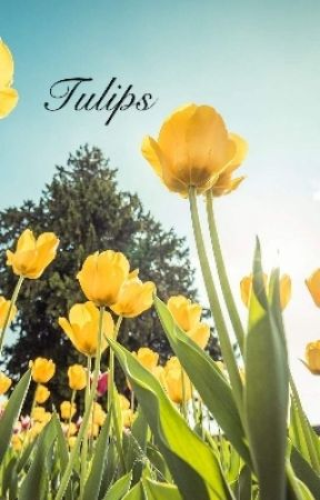 Tulips by uniquesprinkles24