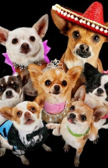 Beverly Hills Chihuahua 2008  IMDb