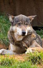 Pet werewolf (slow updates) by gillyardl