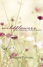 wildflowers by RosannaPatruno