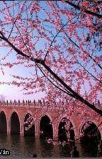 Kinh đô đào hoa nguyên - Phiêu Ly Cơ by NguyetLaoTreTrau