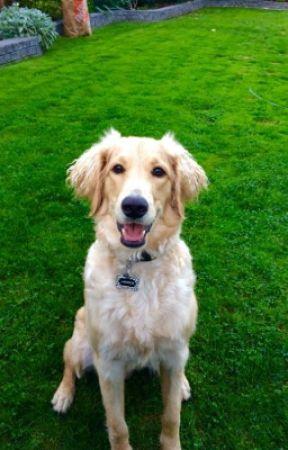 Jasper the Dogs Secret Life by grovegal