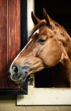 Хенкель. История рысака как скаковой лошади. by Unicorn_Rock