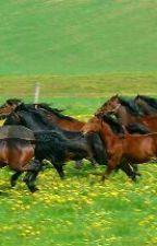 Moje konie by Gymkana