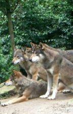 ♥Mein Wolfsrudel♥ by Wolfskind001