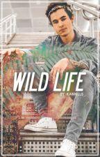 Wild Life by kiankills