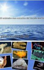 Los 10 Animales Mas Extraños Del Oceano  by Paradis_Dark