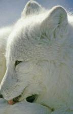 THE MYSTERIOUS WOLF GIRL by HeavenlyHottygirl