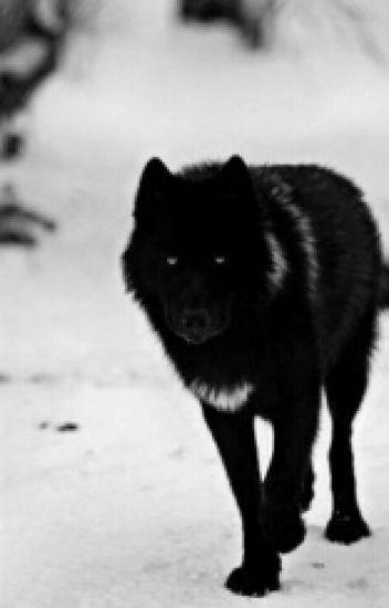 Rejected (boyxboy) (Werewolf)