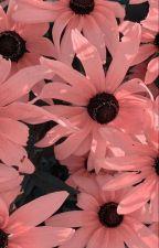 being seventeen's little sister • seventeen by -ellesthetic