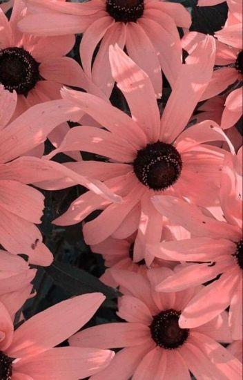 being seventeen's little sister • seventeen