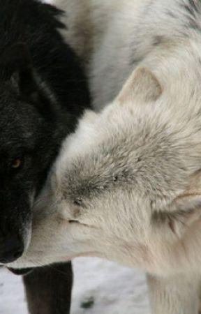 Ours (boyxboy werewolf) by Stephie446
