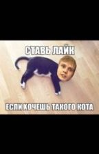 Коты правят миром. by pouriiiii