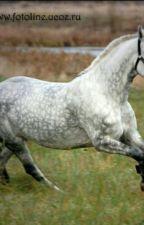 Лошадь в поле✨ by _Varvarahorse_