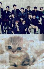 Un gatito? Exo y Tu by XxBlackMusicxX