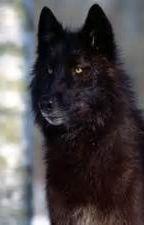 shadow wolf by ozzyahari21