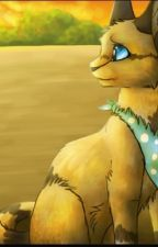 Warrior cats: The time of sand by rainsplash224