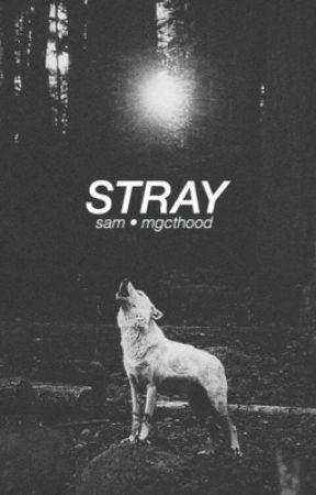 Stray • OT4 by mgcthood