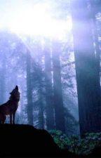 Wolf Of The Moon by EliizabethGarciia24