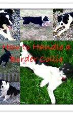 How to Handle a Border Collie by Jessicaross_xox