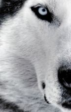 En la mira del lobo by KimGuardadoDjchoi