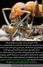 اسرار  السنه النبويه by malik10045