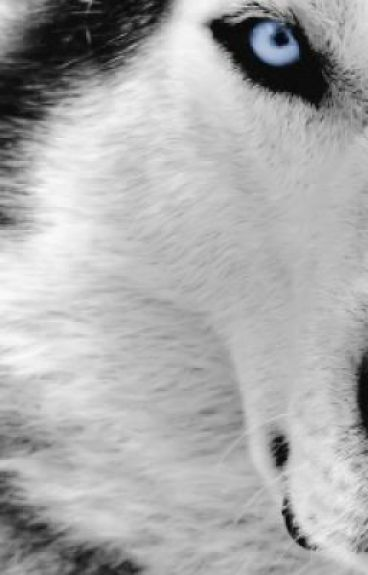 The White Wolf (Jacob Black love story)
