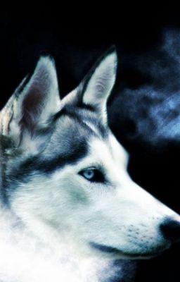 Đọc truyện [ Longfic] [ Dark Moon ] [ AllBaek]