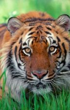 Tiger in the woods by canadagirl03