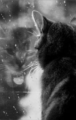 Khi loài mèo lên tiếng