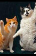 Os  3  gatinhos by Gigi_Kids