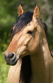 Horsey Horsey Horse [on hold] by AHorsey