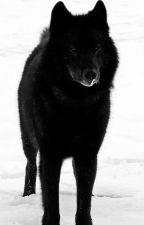 Los lobos de Beacon Hills by Aza-chan