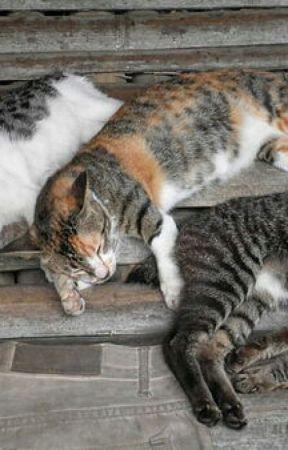 Warrior Cats Mating Wattpad