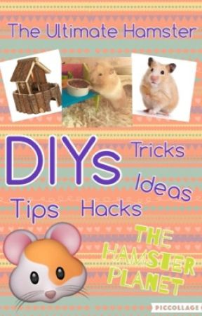 The Ultimate Hamster DIYs by TheHamsterPlanet