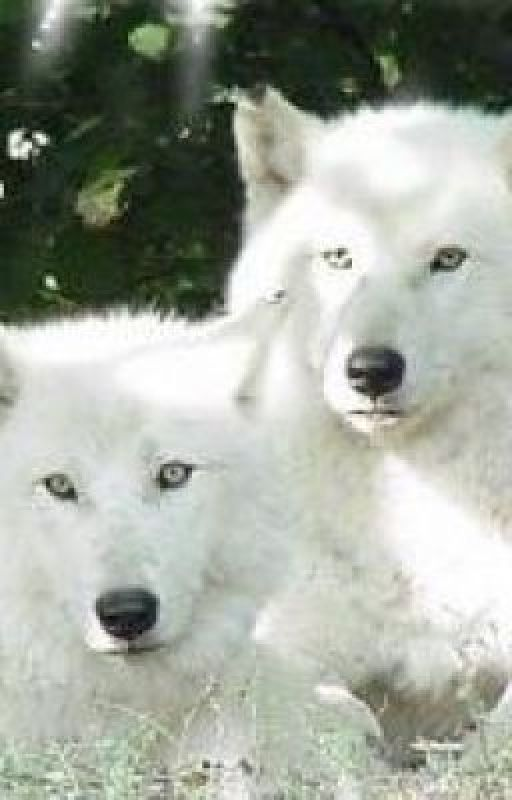 The wolf twins by SummerJennings