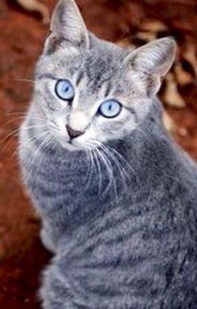 noir mature chatte photos