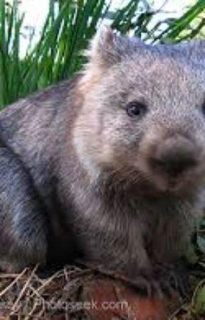 Wilson the wombat by spongebob131