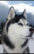 Husky Dogs by HungerGamesLover15