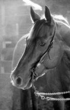 Лошади и всё о них by Margo-i-Olenka