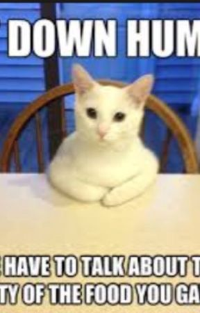 Cat Memes by Kewlon