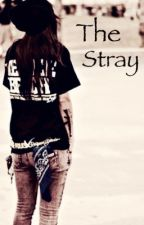 The Stray by Pandoraa_