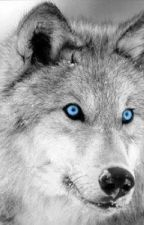 The Blue Eyed Wolf. by chickenwhisperer16